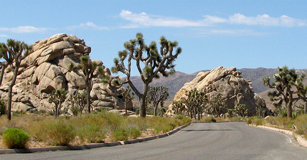 Accommodation to Joshua Tree National Park by Twentynine Palms, CA