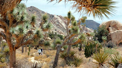 Exploring and walking in desert