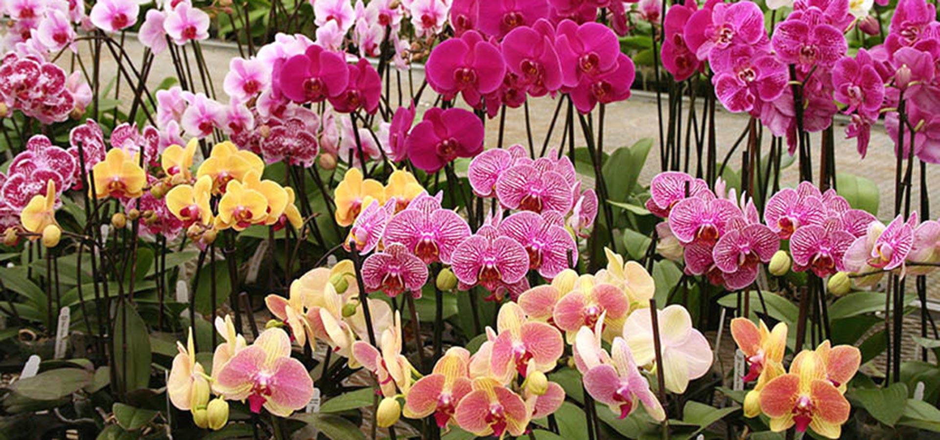 Gubler Orchids