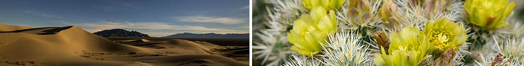 California Desert and Flowers