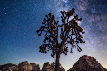 Starry Night in Joshua Tree National Park by Chip Morton