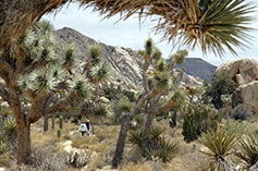 Mojave National Preserve at Twentynine Palms, CA