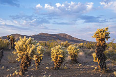 Mojave National Monuments at Twentynine Palms, CA