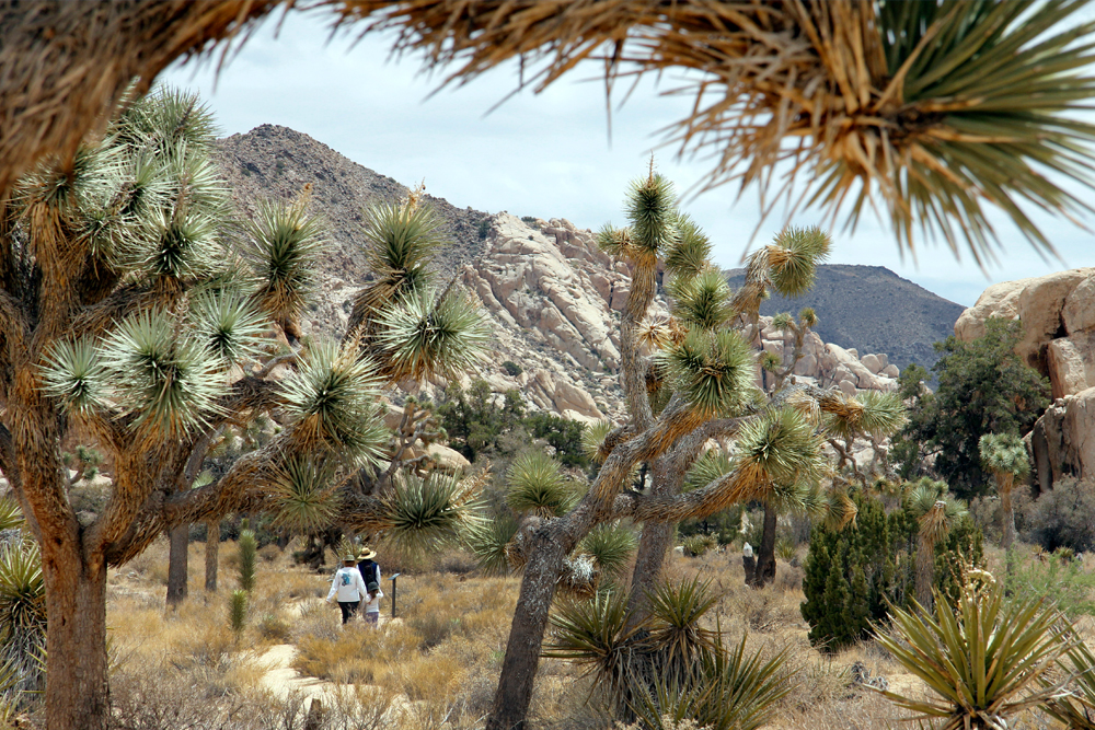 Explore Joshua Tree National Park