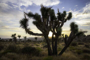 Joshua Tree National Park, Twentynine Palms California