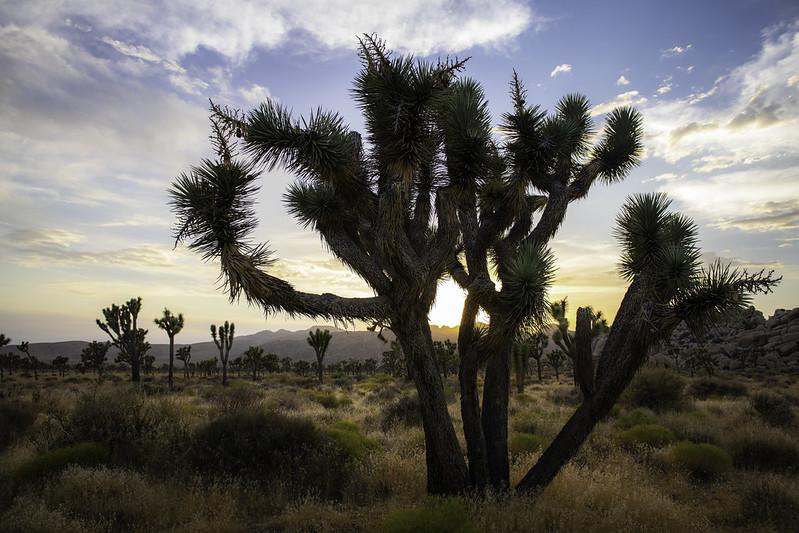 Joshua Tree National Park, Twentynine Palms California