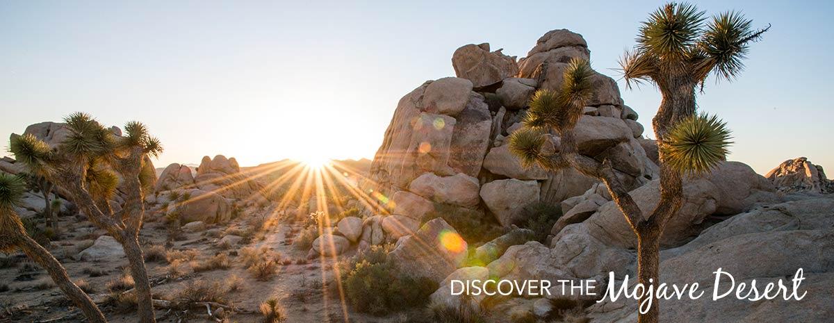 Discover the Mojave Desert