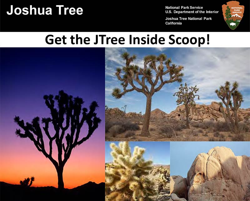 Joshua Tree National Park Inside Scoop