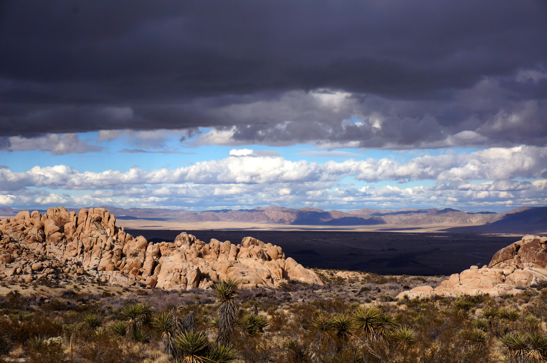 Desert Institute at Joshua Tree National Park
